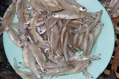 Peixes secados pequenos Foto de Stock Royalty Free