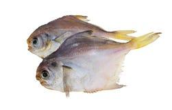 Peixes secados. Piranha. Imagens de Stock