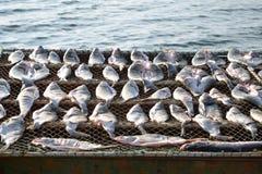 Peixes secos Imagens de Stock