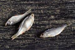 Peixes secos Fotos de Stock Royalty Free
