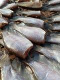 Peixes secos Foto de Stock Royalty Free
