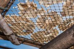 Peixes secos 7 Fotos de Stock