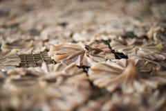 Peixes secos 19 Foto de Stock
