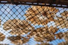 Peixes secos 26 Fotos de Stock