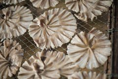 Peixes secos 38 Imagens de Stock Royalty Free