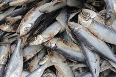 peixes secos brancos ao sul de Tailândia Fotografia de Stock Royalty Free