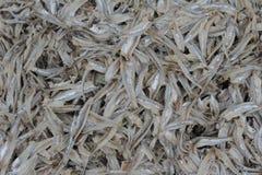 Peixes secos brancos pequenos ao sul de Tailândia Fotos de Stock