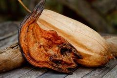 Peixes secos do snackehead com bucha Foto de Stock Royalty Free