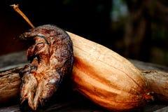 Peixes secos do snackehead com bucha Imagem de Stock Royalty Free