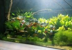 Peixes selvagens imagem de stock royalty free