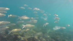 Peixes sob a água video estoque