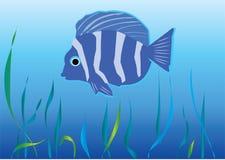 Peixes sob a água ilustração do vetor
