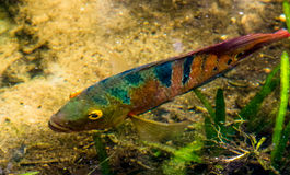 Peixes sob a água Imagem de Stock Royalty Free