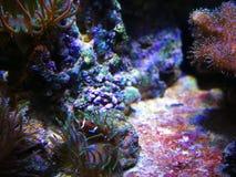 Peixes sob a água no aquário em Barcelona imagens de stock