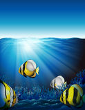 Peixes sob o mar Fotos de Stock