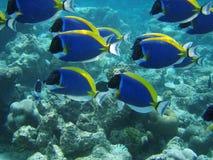 Peixes subaquáticos Imagens de Stock