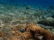 Peixes subaquáticos do mundo Fotos de Stock