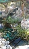 Peixes tímidos da lagoa imagens de stock royalty free