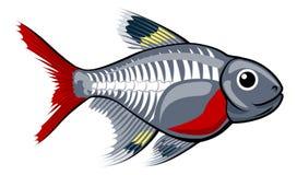 Peixes tetra dos desenhos animados do raio X ilustração stock