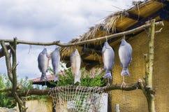 Peixes tingidos na vila Imagem de Stock Royalty Free