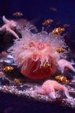 Peixes tropicais imagens de stock royalty free