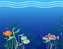 Peixes tropicais. Fotografia de Stock Royalty Free