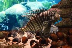 Peixes tropicais Fotos de Stock Royalty Free
