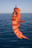 Peixes tropicais bonitos do Mar Vermelho Fotografia de Stock