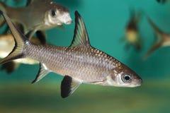 Peixes tropicais coloridos Foto de Stock Royalty Free