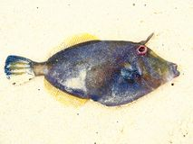 Peixes tropicais coloridos excelentes com fundo da areia da praia fotos de stock