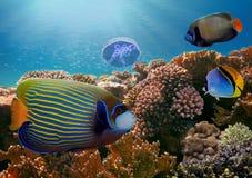 Peixes tropicais e corais duros no Mar Vermelho Imagem de Stock Royalty Free