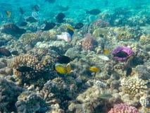 Peixes tropicais e recife coral na luz solar Fotos de Stock Royalty Free