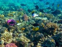 Peixes tropicais e recife coral na luz solar imagem de stock royalty free