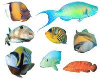 Peixes tropicais isolados ilustração stock