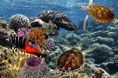 Peixes tropicais Mundo subaquático Mar Vermelho Fotos de Stock Royalty Free