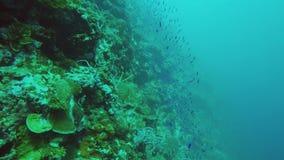 Peixes tropicais no recife de corais video estoque