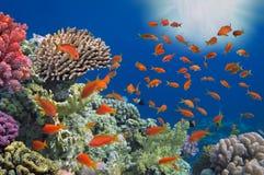 Peixes tropicais no recife de corais Imagens de Stock