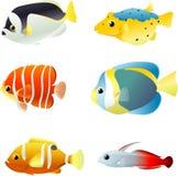 Peixes tropicais subaquáticos Foto de Stock