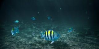 Peixes tropicais subaquáticos foto de stock royalty free