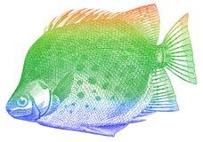 Peixes verdes Imagens de Stock Royalty Free