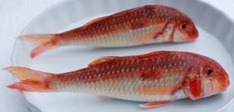 Peixes vermelhos Fotos de Stock