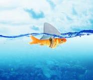 Peixes vermelhos como o tubarão imagens de stock royalty free