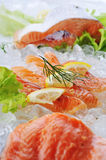 Peixes vermelhos no gelo fotografia de stock