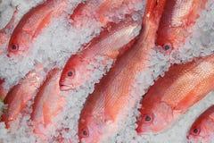 Peixes vermelhos no gelo imagem de stock