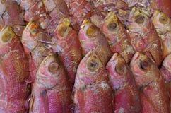 Peixes vermelhos no gelo Fotos de Stock Royalty Free