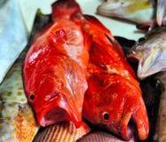 Peixes vermelhos para a venda no mercado público Imagem de Stock