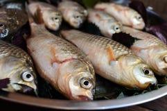 Peixes vivos & x28; carp& x29; Prendedor fresco Fim acima imagem de stock
