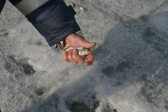 Peixes vivos nas mãos do pescador na pesca do inverno imagem de stock royalty free