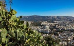 Pejzaż miejski Ateny z białymi budynkami architektura, góra, kaktus i niebieskie niebo, zdjęcie royalty free
