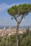 Pejzaż miejski Florencja, Włochy z Duomo katedrą i parasol sosną Fotografia Royalty Free